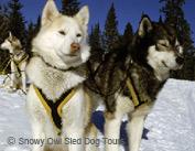banff-dogsledding-15