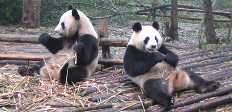4 Fun Things to Do in Chengdu, China